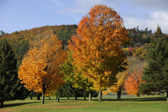 Fall foliage in Cooperstown. (Milo Stewart Jr./National Baseball Hall of Fame and Museum)